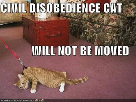 funny-pictures-civil-disobedience-c